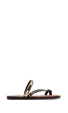 Dolce Vita Franzen Sandal in Black