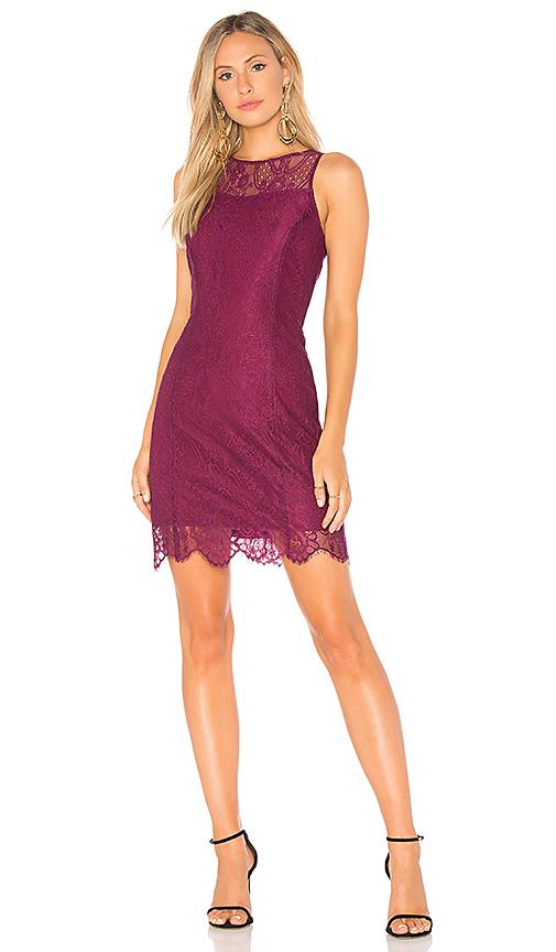 Bobi BLACK Paradise Lace Mini Dress in Purple