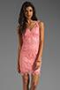 Image 1 of BB Dakota Allium Lace Dress in Pink Lemonade
