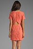 Image 4 of Dolce Vita Sarus Raised Lace Short Sleeve Dress in Coral