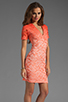 Image 3 of Dolce Vita Alexis Stretch Lace Dress in Pink Ombre