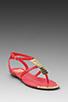 Image 1 of DV by Dolce Vita Apex Sandal in Coral