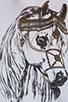 Image 4 of Lauren Moshi Macy Foil Royal Horse Open Shoulder Top in White