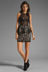 Image 2 of Style Stalker Panthers Lace Dress in Black