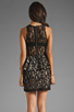 Image 4 of Style Stalker Panthers Lace Dress in Black