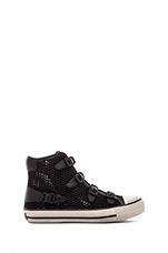 Vanessa Sneaker in Black