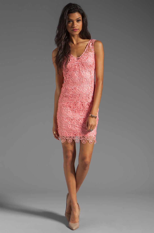 BB Dakota Allium Lace Dress in Pink Lemonade