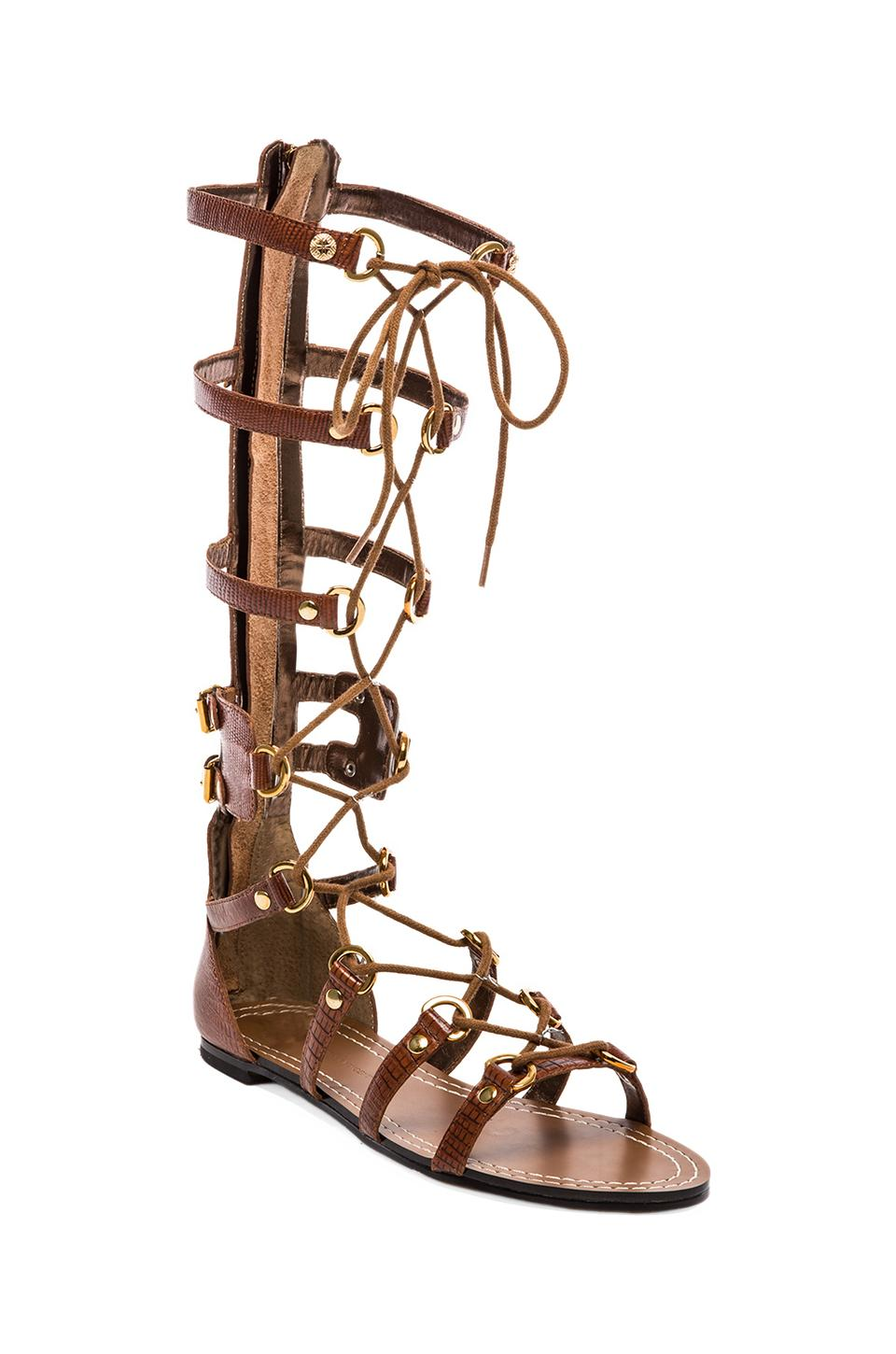 Twelfth Street By Cynthia Vincent Athena Lace Up Embossed Leather Gladiator Sandal in Cognac